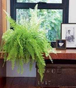A importância das plantas para dentro de casa: conheça dicas valiosas